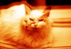 cats (davlup) Tags: pet cat gatto animale gatta pallina bagascia