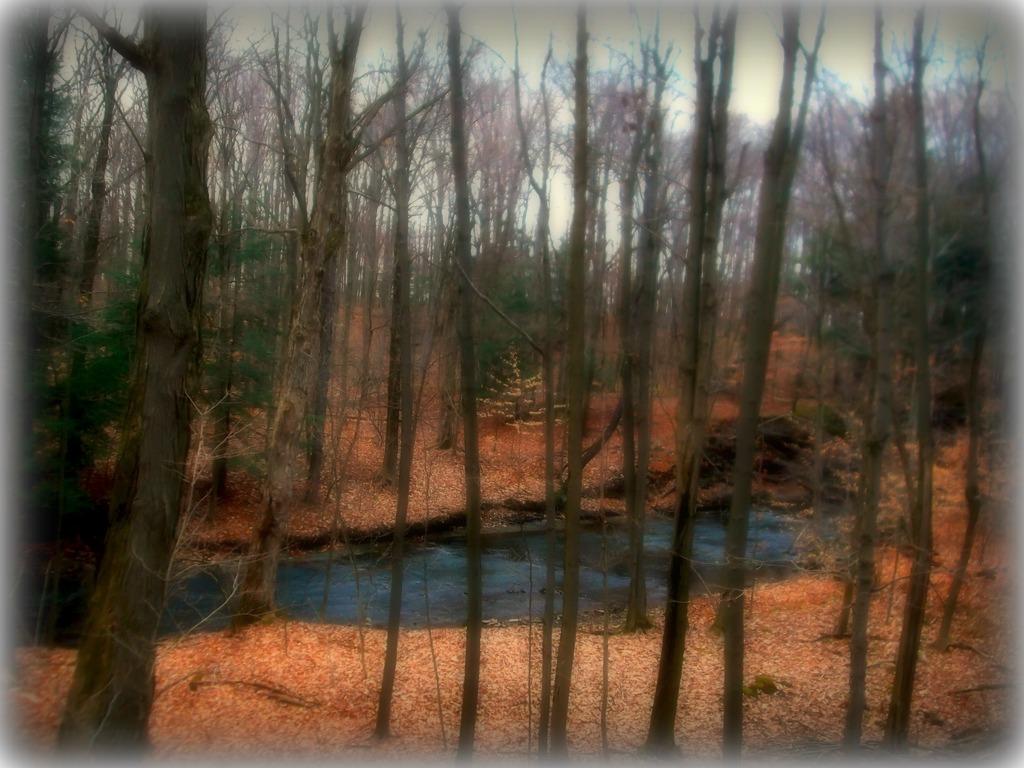 Nature Orchard Park, NY
