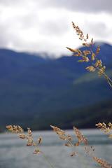 Arrow Lake (JenS_Photography) Tags: summer lake canada mountains water grass clouds kananaskis britishcolumbia overcast edgewood arrowlake smithdorian