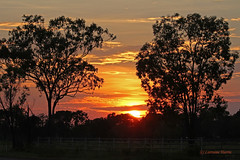 Christmas Morning (aussiegypsy_Katherine, NT) Tags: australia australian aussie outback katherine northernterritory nt rural country landscape silhouette sunrise skyscape clouds sun remote isolated bush christmasday xmas morning early lorraineharris lorraine harris aussiegypsy