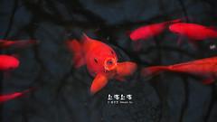 "DSC_9006 (Minions_) Tags: china asia shanghai prc 中国 上海 城市 夜景 cityview ""shanghai 亚洲 中国上海 魔都"