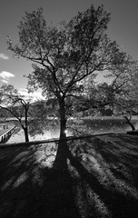 Tree Shapes (Sun reflection) (GOR44Photographic) Tags: mono loch tamron lomond rowardennan 60d gor44