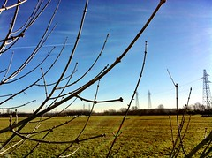 Winter sunny day (rupertalbe - rupertalbegraphic) Tags: winter campagna alberto sole inverno dicembre freddo mariani iphone iphone4 iphonography rupertalbe rupertalbegraphic uploaded:by=flickrmobile flickriosapp:filter=nofilter piscinamelegnano
