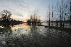 Les pieds dans l'eau (photosenvrac) Tags: photo eau paysage loire inondation fleuve thierryduchamp