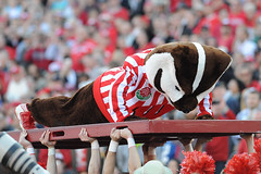 In a UW-Madison tradition, mascot Bucky Badger does push ups for each of the points scored following the Wisconsin's second touchdown in the first half of the 2013 Rose Bowl football game between the University of Wisconsin-Madison Badgers and the Stanfor