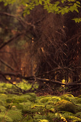 freelensing in the wood (Timofey Gavrilov) Tags: trees plants blur green grass rock forest lens moss woods nikon free shift ferns tilt lensing whacking freelensing d5100