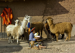 Cuzco - Peru (com suas lhamas e alpacas) (Walter C Mello) Tags: peru cuzco landmark perú 2008 landmarkphoto famouslandmarkphoto