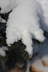 snow fingers