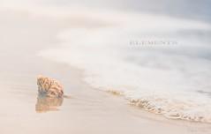 ELEMENTS (Chris Dve) Tags: sonyalpha77 85mm chrisdve chrisdvefranceflickrcomchrisdeve deve dxofilmpack france grain zen beach bleu blue bokeh bretagne chris coqillage coquille coucherdesoleil dor douceur eau f14 lumire mer nature ocan onirique plage reflet sable samyang sea sol squeleton sunset traitement trsor vague vintage water wave