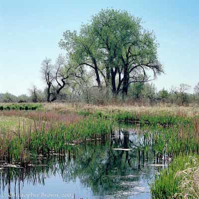Photo - Wetlands