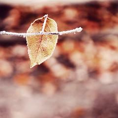 Winter... (Bahram Naghibzadeh) Tags: autumn winter tree fall nature leaf iran iranian  mashhad khorasan    mashad  bahram torghabeh khorassan         naghibzadeh