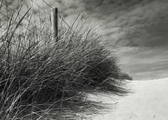 France - Le Touquet (__Bentom Wyemji__) Tags: blackandwhite bw paris france beach photography flickr photographie playa plage 海滩 フランス ビーチ 바닷가 touquet 沙 法国 砂 프랑스 모래 bentom canon5dmarkii httpbutterflyphotography500pxcom bentomwyemji wyemji bentomwyemjy