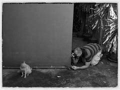 จับ(ภาพ)แมว