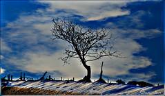 Pam fod eira yn wyn? (brynmeillion - JAN) Tags: blue sky snow tree wales hedge ceredigion glas eira awyr coeden clawdd ymru abigfave nikond80 penrhiwpal ipiccy