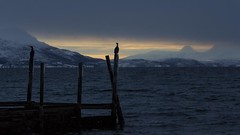Cormorants (Aaron_S.) Tags: ocean winter sunset bird norway canon pier norge north cormorant sommary canon70200mm 60d
