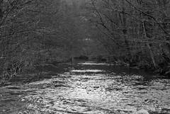 (db | photographer) Tags: blackandwhite france forest river blackwhite nikon december noiretblanc riviere foret languedoc gard decembre arve languedocroussillon monochrone d80 levigan 1750mm nikond80 damienbottura bottura cavaillac tamronspaf1750mmf28xrdi adobelightroom35 adobephotoshopelements10 molierescavaillac