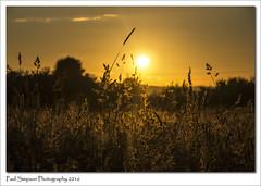 Sunset (Paul Simpson Photography) Tags: trees sunset summer sun nature colors grass golden colours naturalworld photosof imageof lookingatthesun photoof imagesof sonya77 paulsimpsonphotography photosofsunsets july2016 showmeasunsetphoto