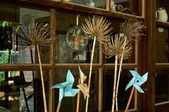 Fuji Velvia 50 (Cecilia Temperli) Tags: fujivelvia50 film nikon nikonfm2 window windowsill agapanthus