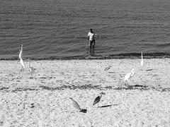 Ilha do Governador (ester_marak) Tags: estermarakphotography estermarakfotografia estermarak ilhadogovernador iphone iphone4s riodejaneiro rio40graus paisagem praia pretoebranco blackandwhite bw pssaros pescador