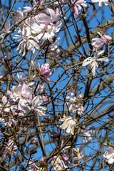 Primavera (Max Besser Jirkal) Tags: spring primavera chile flowers flores