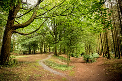 (Charlie Little) Tags: footpath woods woodland trees sony a6000 ulverston cumbria conishead