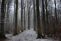 Snow for a day (rabbit_photo) Tags: snow forest february hills