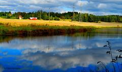 m_heijastuksia (Paivi Hannele) Tags: finland ourfinland landscape luonto kasvi maisema vesi puut thisisfinland joki jrvi syksy autumn
