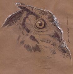 buho a lapicero (ivanutrera) Tags: draw dibujo drawing dibujoalapicero dibujoenboligrafo animal owl buho sketch sketching pen lapicero