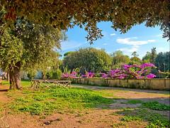 Villa Borghese 26/09/2016 (al.scuderi71) Tags: bouganville roma rome villa borghese park tree beautiful view panasonic panasonicgh4 fiori flowers