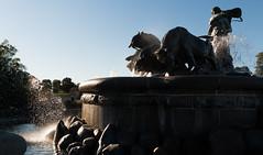 Gefionspringvandet II (mandoft) Tags: agua denmark fuente buey contraluz copenhague estatua kbenhavn regincapital dinamarca dk