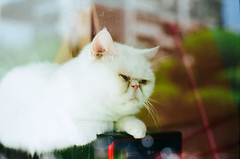 Q (Mr.Sai) Tags: rolleiflex sl35me rollei 50mm f18 hft qbm fuji 100 analog     taiwan taipei cat kitty