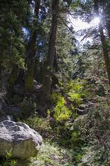 (vallerieeeee) Tags: sequoianationalforest sequoia giantsequoia sierranevada sierra golden trout wilderness goldentroutwilderness mountain hike camp backpacking summitlake lake