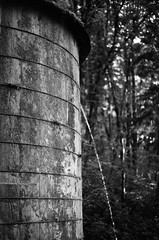 8.2016 Elwah Falls and Loon Mountain BW E17 (Jcicely) Tags: monthaugust otherkeywordsactivityhiking otherkeywordscamerafilmpentax35mm otherkeywordscamerafilmpentax35mmbwfilm placesportland