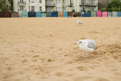 20160925-IMGP8085 (fleetingphotons) Tags: pentaxk1 sigma35mmf14art broadstairskent vikingbay beach gull mean