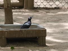 P2230476 (Gareth's Pix) Tags: aviarionacionaldecolombia baru colombia aviario bird