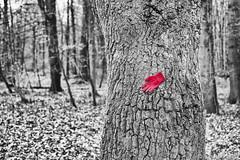 Der rote Handschuh 01.12.2012