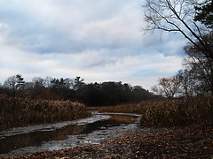 Credit River North Channel (creditflats) Tags: autumn sky ontario canada fall water leaves clouds reflections river reeds mud north olympus credit channel ep1 portcredit