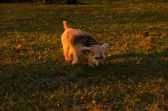 Flickr-4022 (VividVisionsPix) Tags: sunset lightpainters