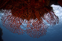 fan0840 (gerb) Tags: ocean blue orange topf25 topv111 coral 1025fav 510fav mexico topv555 topv333 underwater scuba fv5 fisheye pi cozumel tvp aquatica d7000 sigma1017fe