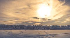Winter Sky // (Sunset Edit) (Auensen) Tags: trees winter sky sun nature oslo norway clouds landscape grande nikon heaven unique large special vista february nikkor epic winterland f28 wintersky 2012 winterscape 2470mm newacademy d7000 nikond7000 nikonnikkor2470mmf28 sunsetedit