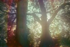 #351 ([ iany trisuzzi ]) Tags: brazil tree film brasil analog 35mm sãopaulo lightleak sp olympustrip35 project365 fujifilmsuperiaxtra400 365days filmsoup