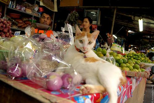 Bangkok City (6)