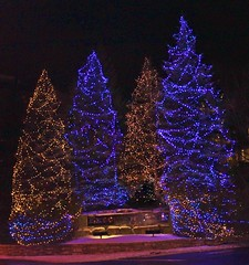 Oh Christmas Tree, Oh... (bigbrowneyez) Tags: christmas trees decorations light beautiful night festive twilight holidays shiny pretty nightshot bright neighborhood celebration lovely fabulous festa natale flickrfun luce twinkling ohchristmastreeoh