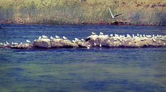 all in all (m.shahbour) Tags: water birds landscape natural egypt nile aswan
