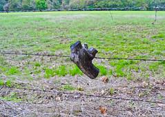SANY0426.jpg (jaxx74) Tags: wood nature fence outdoors stump fields fencing elkhart barbwire fenceline northeasttexas elkharttexas stuckinafence