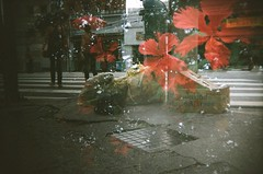 #365 ([ iany trisuzzi ]) Tags: street flowers film analog trash 35mm holga garbage doubleexposure toycamera multipleexposure day365 project365 365days 365365 lomographycolornegative400 holga135bctlr