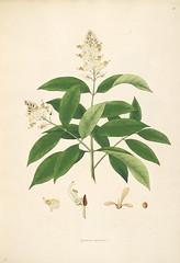 Anglų lietuvių žodynas. Žodis family malpighiaceae reiškia šeimos malpighiaceae lietuviškai.