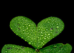 Green heart (oZopanda) Tags: macro verde green nature water drops agua nikon gotas corazon d600 treboles 2485