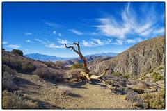 The Top - Joshua Tree National Forest, CA (gastwa) Tags: california sky mountain tree nature clouds forest landscape nikon focus scenery control angle joshua wide perspective shift wideangle andrew palm full national springs frame 24mm manual fullframe fx tilt sensor d800 f35 tiltshift pce gastwirth d800e andrewgastwirth