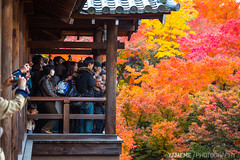 楓擠人也擠 Jam / Kyoto, Japan (yameme) Tags: travel japan eos maple kyoto tofukuji 京都 日本 kansai 旅行 關西 楓葉 東福寺 24105mmlis 5d3 5dmarkiii